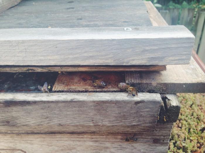hemma hos malin persson biodling i trädgården
