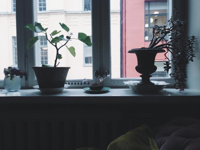 blommor-växter-fönsterkarm-stilleben-inspiration-fönster 223