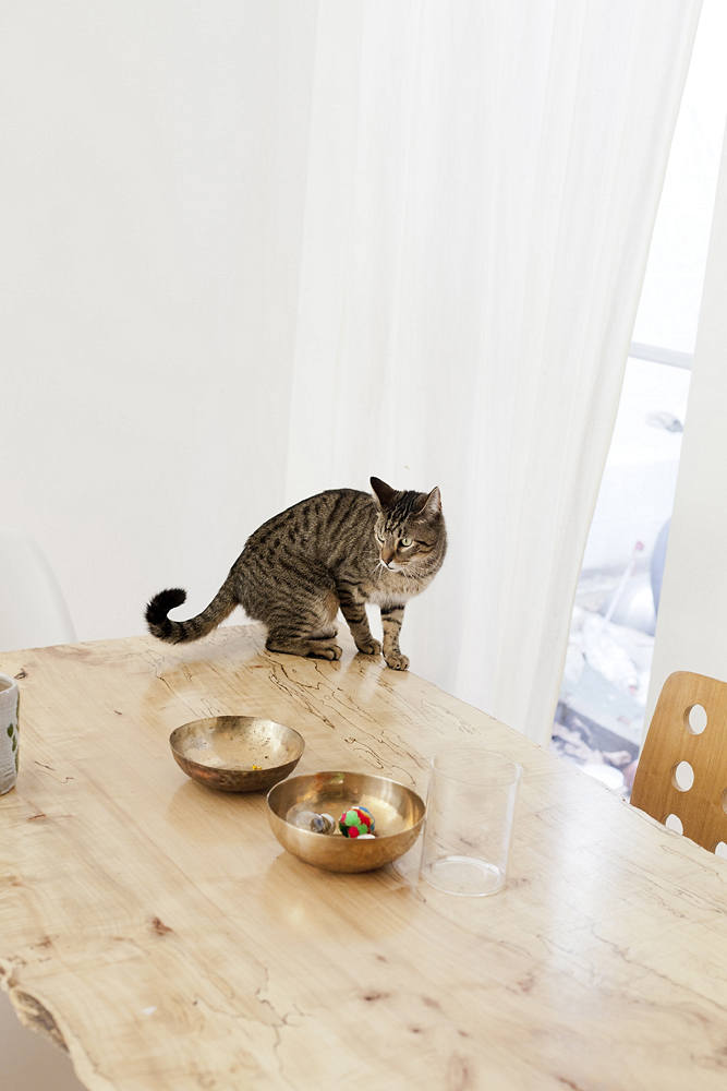 agnes_thor_julie_thevenot_cat table brass bowls