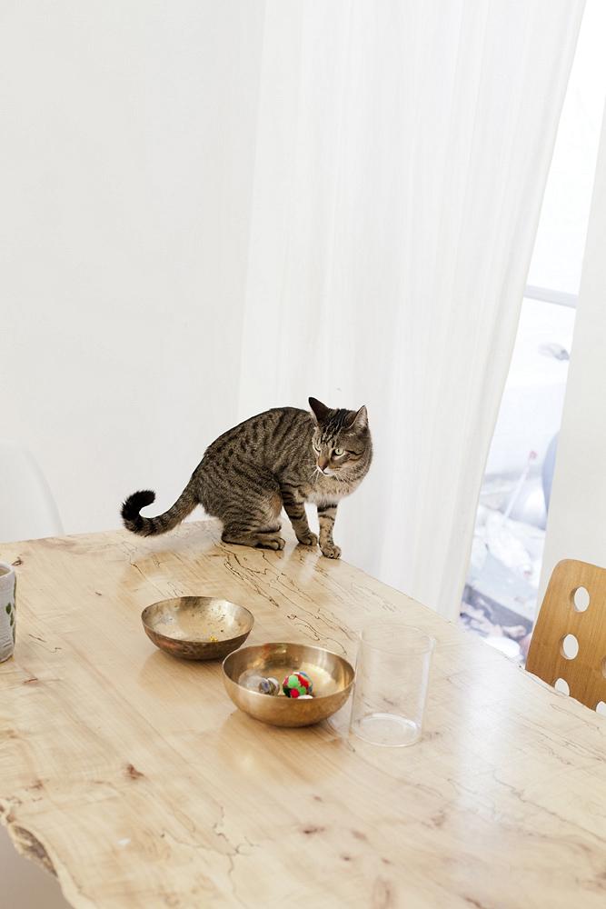 agnes_thor_julie_thevenot_cat table brass bowls