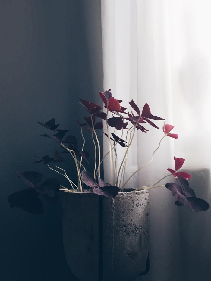 – Odla. Till våren vill jag skapa en skandinavisk djungel på vår kungsbalkong!