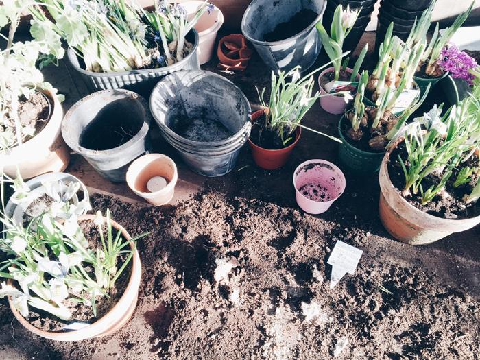 odla-kopa-fron-rosendals-tradgardar