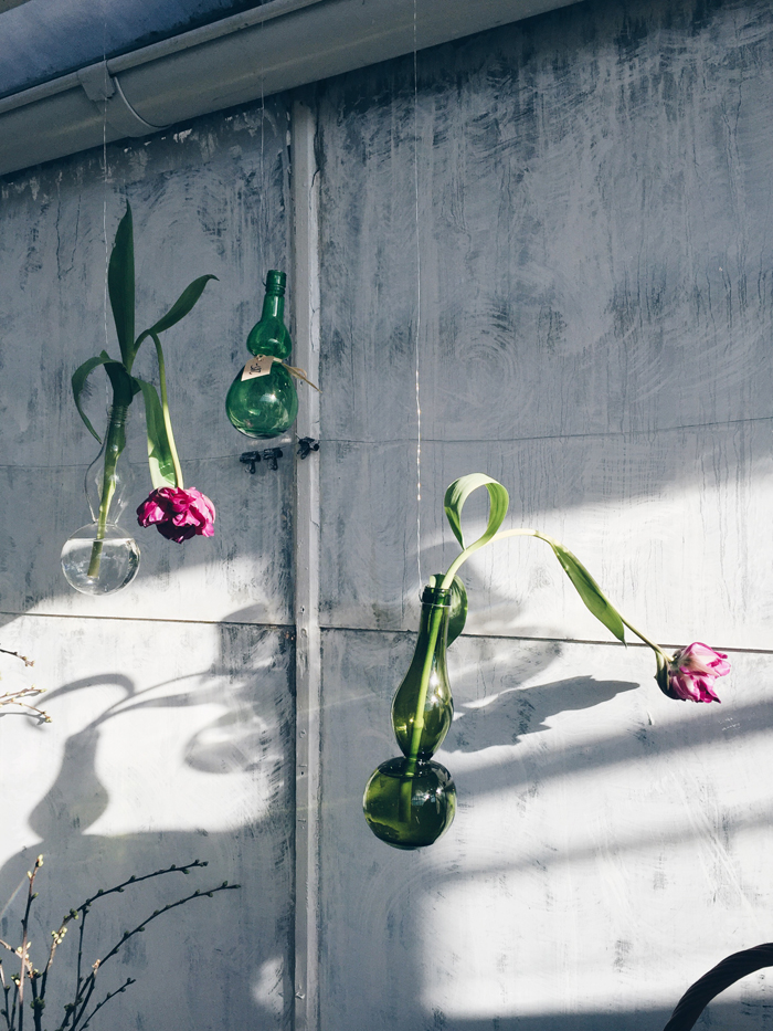 vaser-som-hanger-tulpaner-rosendals-tradgardar