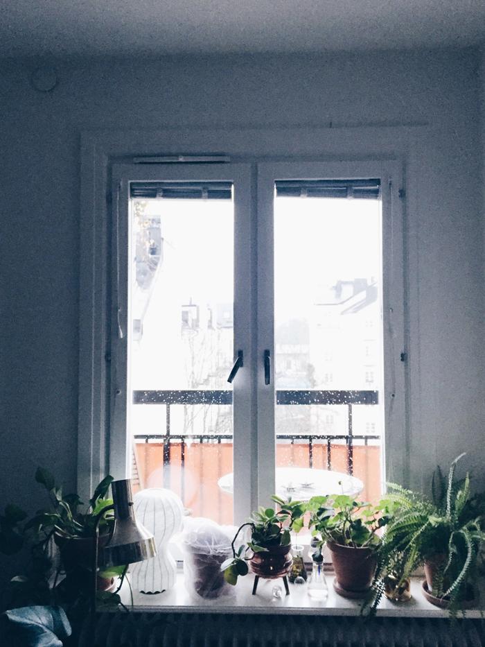 fönster-växter-regn