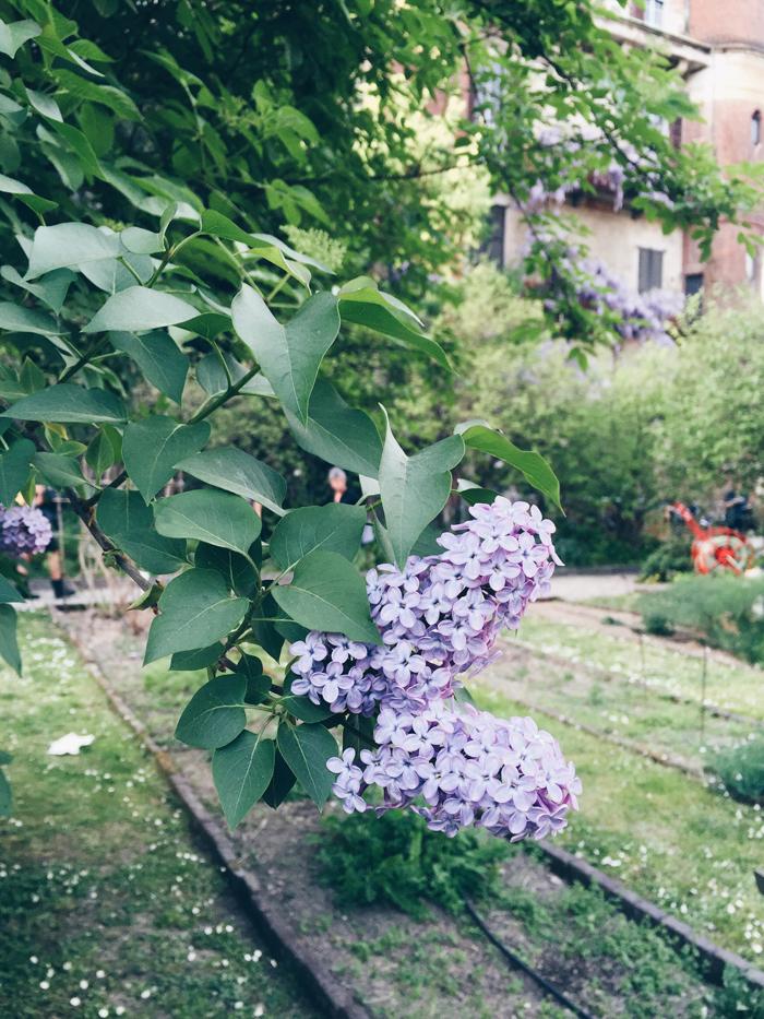 botanical-garden-in-brera-milan