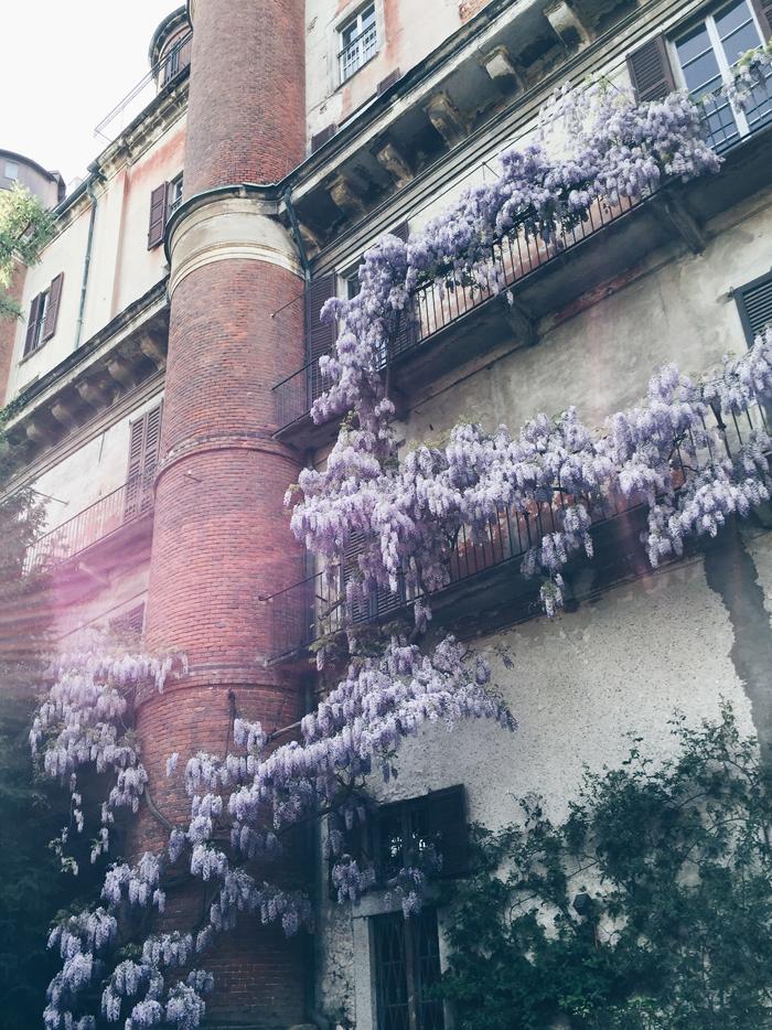 wisteria-botanical-garden-brera-milan