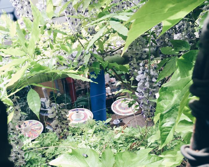 wisteria-rosanna-orlandi